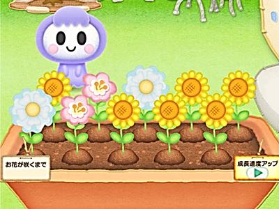 お花の収穫